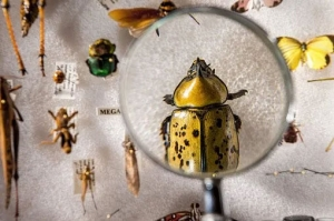 Image of magnifying glass looking at beetle
