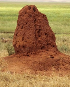 Image of a termite mound