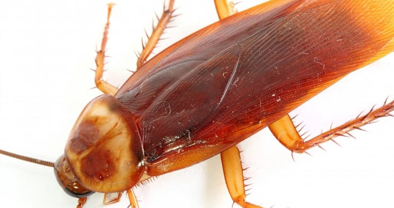 An Image of a cockroach