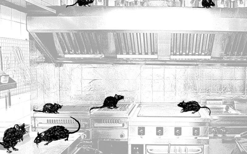 Image of rats running around a kitchen