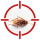 Image of a cockroach