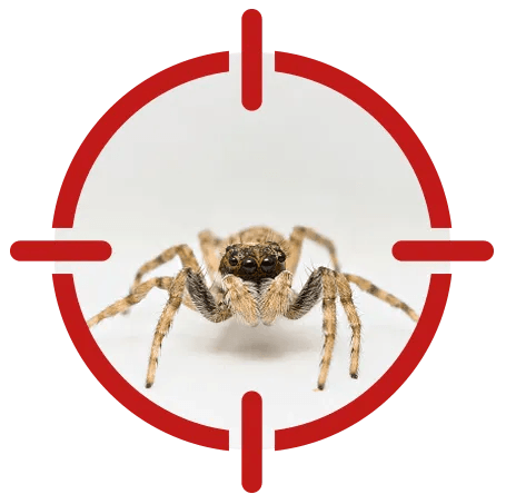 Image of a spider