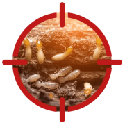 Image of termites