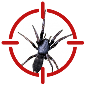 Image of a white tailed spider