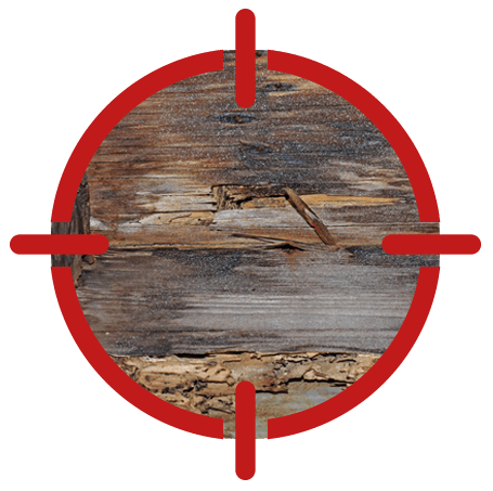 Image of woodrot