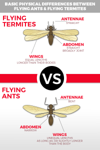 Iamge of termites and ants difference