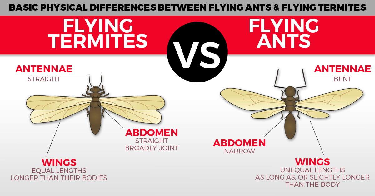 image of termites and ants difference