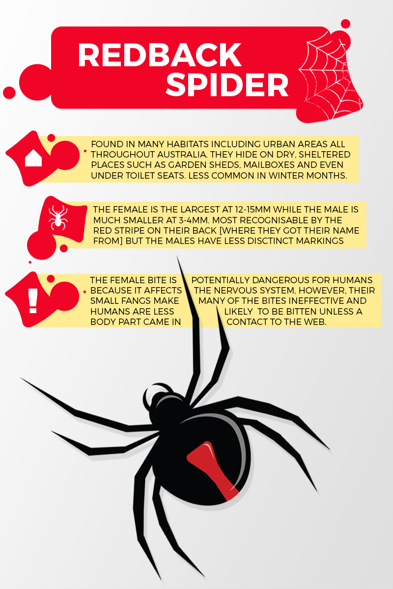 Image of red back spider infographic